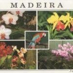 Cartolina da Madeira