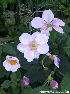 Fiori e foglie for Immagini fiori autunnali