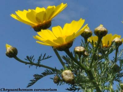 Fiori e foglie altavistaventures Image collections