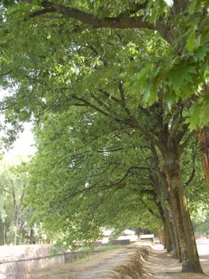 Fiori e foglie for Alberi simili alle querce