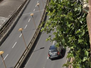 Ficus carica - Strada Aldo Moro