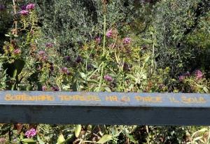 Valeriana rossa <em>Centranthus ruber</em>