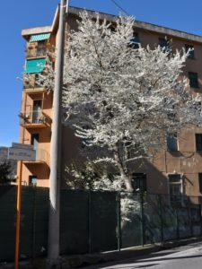 primavera in via Terpi